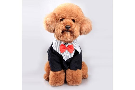 2 in 1 Doggy Tuxedo with Stripe Shirt & Bow-tie