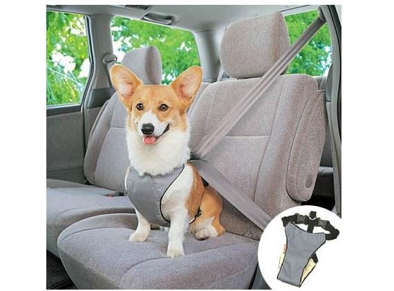حمل و نقل سگ با ماشین