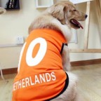 UEFA Netherlands Number 10  Doggy Football Jersery