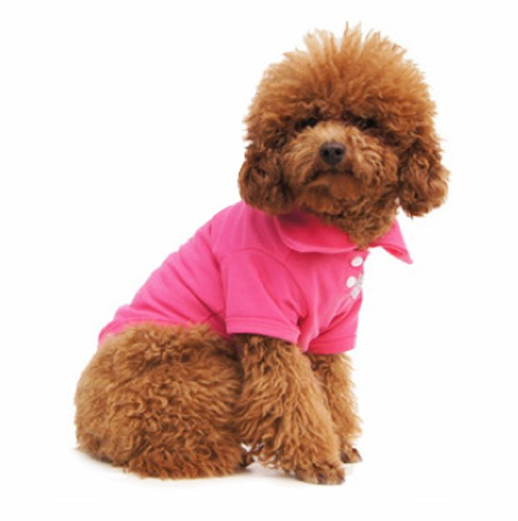 Candy Colour Polo Tees for Your Puppy