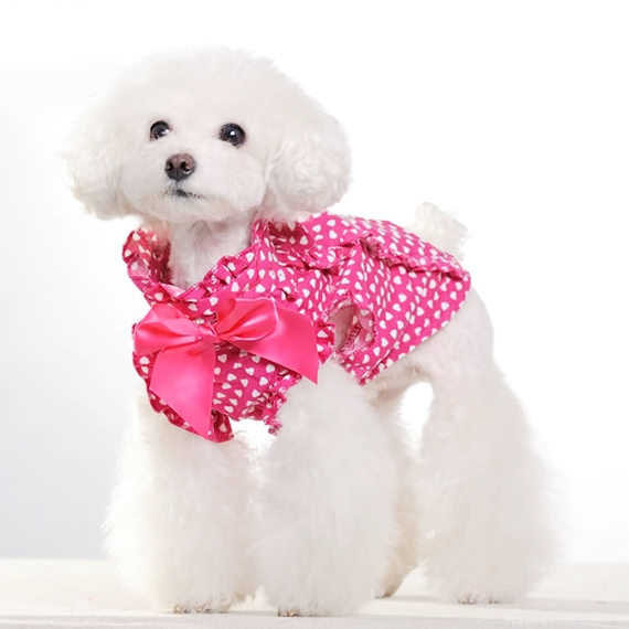 Shocking Bow Ribbon Dress for you Puppy