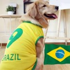 World Cup Brazil Number 9 Doggy Football Jersey