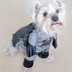 Batman Pet Costume