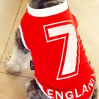 UEFA England Number 7 Doggy Football Jersey