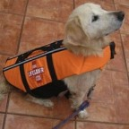 Doggy Life Jacket with Side Pocket