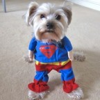 Superman Pet Costume