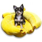 Luxurious banana bunch bed for your pets
